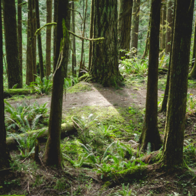 A hiking trial which runs along the Golden Ears Parkway.
