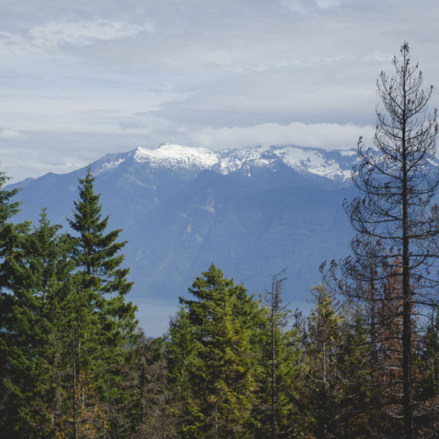 Cycling to the Harrison Fire Lookout Tower